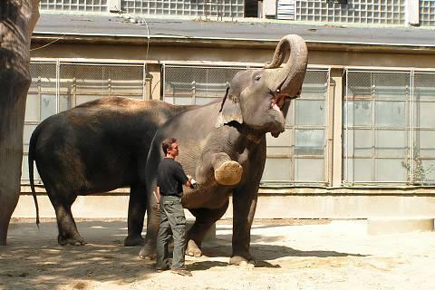 FOTKA - sloni při čištění