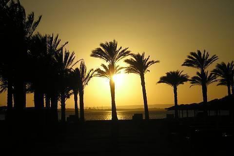 FOTKA - za palmami