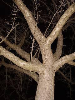 FOTKA - Strom chobotnica