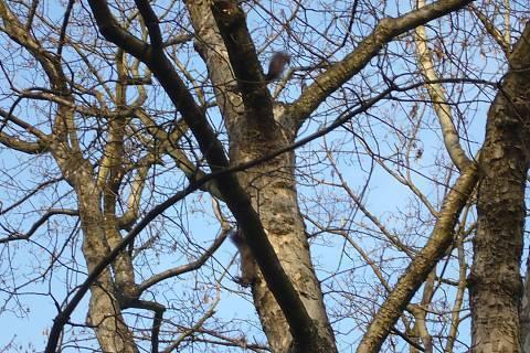 FOTKA - A tady už jsou veverky dvě