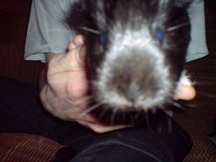 FOTKA - tady vypadá jako krysa :-(
