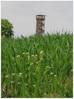 FOTKA - Záběr s rostlinami a rozhlednou v pozadí