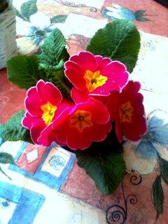 FOTKA - květiny ..5..