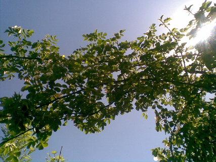 FOTKA - Šípek ve slunci