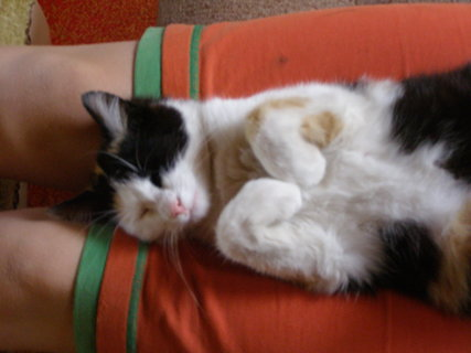 FOTKA - kočičí mimčo...,.
