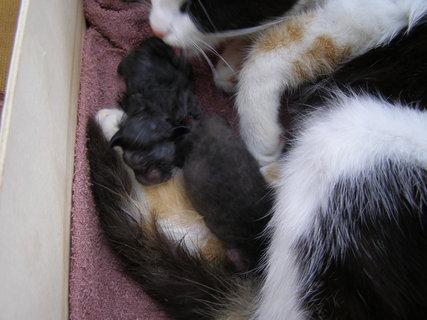 FOTKA - naše nová koťátka