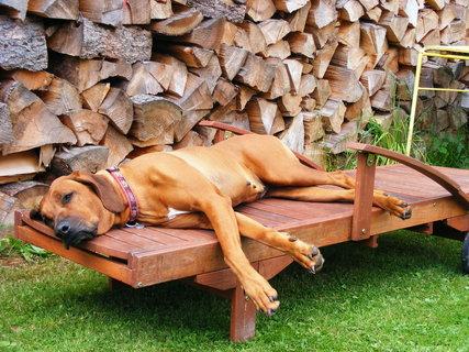 FOTKA - zasloužený odpočinek
