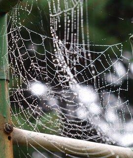 FOTKA - všude samá pavučina