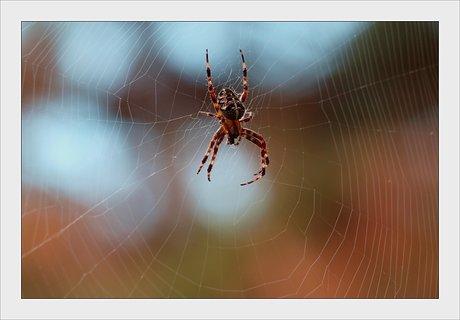 FOTKA - pavouk v síti