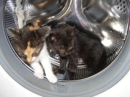 FOTKA - průzkum pračky...
