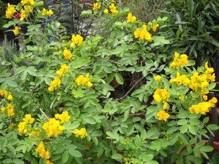 FOTKA - V botanické zahradě