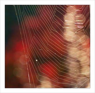 FOTKA - fantazie s pavučinou
