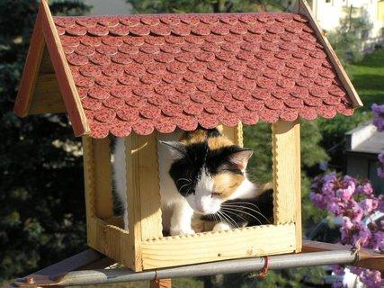 FOTKA - TZed je to můj domek