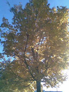 FOTKA - Podzimní strom