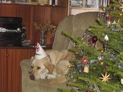 FOTKA - Veselé vánoce :-)