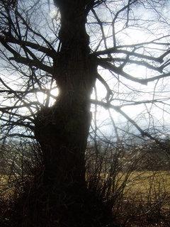 FOTKA - Cesta od Blanseku 2