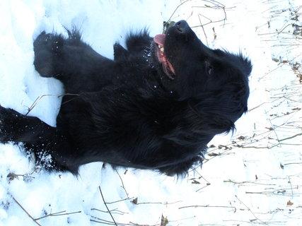 FOTKA -  kráska na sněhu