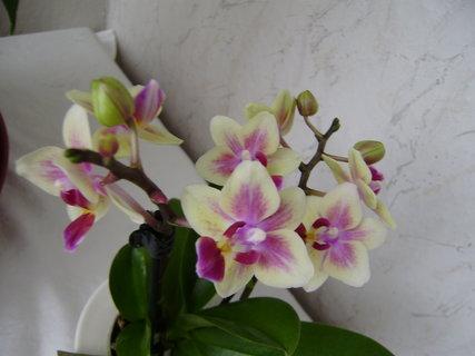 FOTKA - a zase květy...2