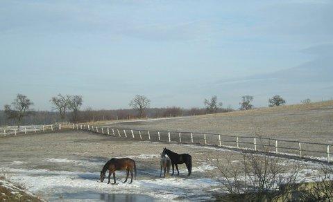 FOTKA - jak je vidět tak chlad koníkům na pastvě nevadí
