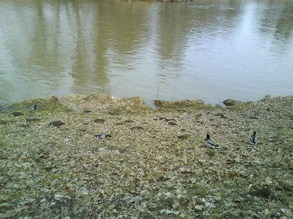 FOTKA - březen u řeky,
