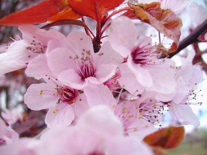 FOTKA - květ, kam se podíváš