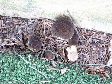 FOTKA - ..další houbičky
