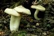 houbování