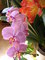 Klivie a Orchidej