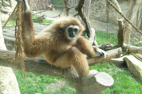 FOTKA - opice.
