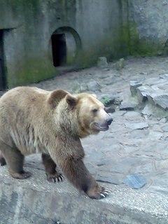 FOTKA - medvedík