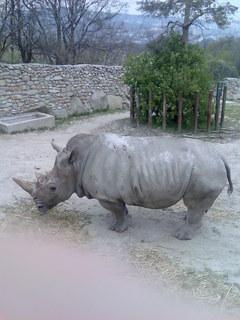 FOTKA - nosorož.