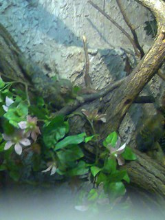 FOTKA - maličká opička