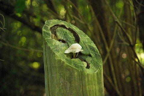 FOTKA - houbicka na drevene znacce