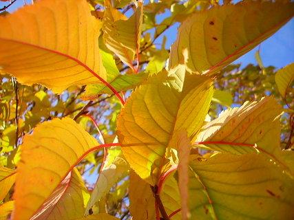 FOTKA - Barevné listí