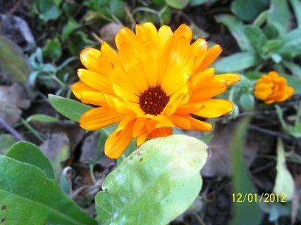FOTKA - 1.prosinec a kvetu..