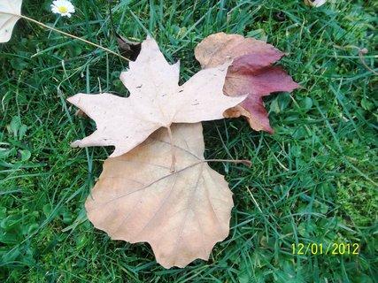 FOTKA - Listí v trávě.