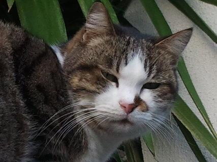 FOTKA - kocicka Stella