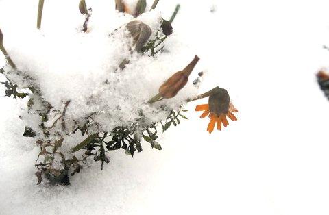 FOTKA - Pět minut včera na mrazu
