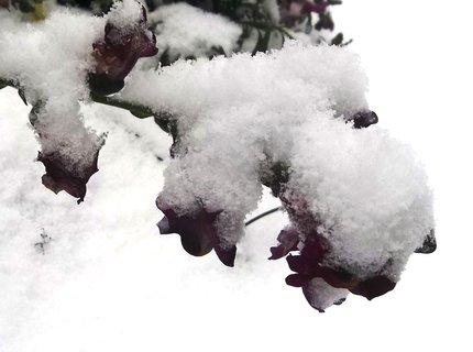 FOTKA - Pět minut včera na mrazu s foťákem na zahradě...