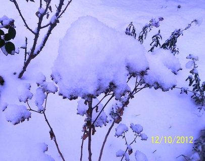 FOTKA - Pět minut včera na mrazu s foťákem ..