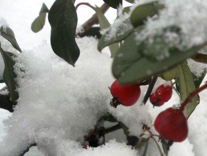 FOTKA - Zima..4