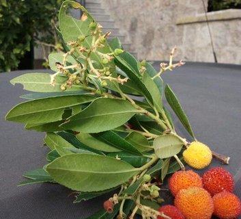FOTKA - sorbus dozrava kolem vanoc, chuti pripomina jahody