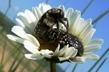 hmyzí harašení