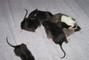Potkaní miminka