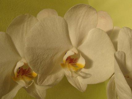 FOTKA - nevinná biela farba