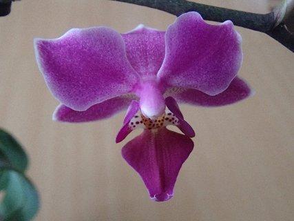FOTKA - má pekný kvet