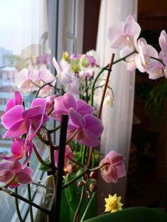 FOTKA - Orchideje VIII