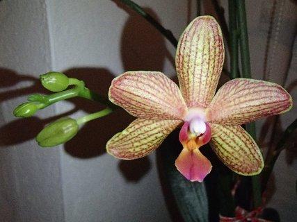 FOTKA - ešte bude mať ďalšie kvety