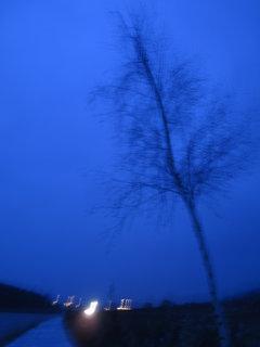 FOTKA - večerní návrat 2