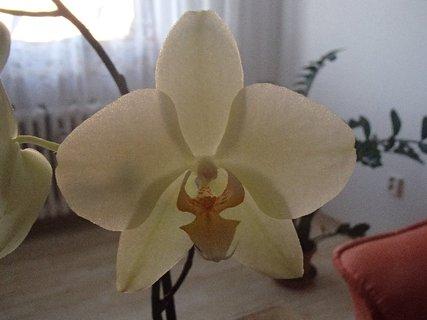 FOTKA - biely kvietok orchidei